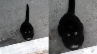 Кот ужасов