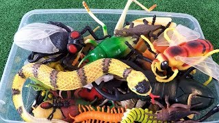 Learn Insects Names and Sounds for Kids - Insects and Bugs Toys for Kids