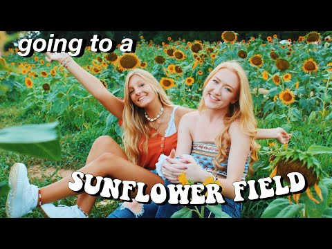 SUMMER DAY IN MY LIFE: SUNFLOWER PHOTOSHOOT thumbnail