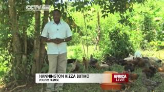 Poultry Business In Uganda
