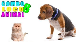 COMBO LOCO ANIMAL 8