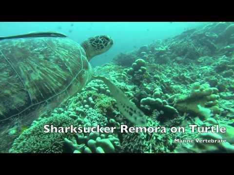 PADI National Geographic Exploration Dive - Tioman 2 June 2013
