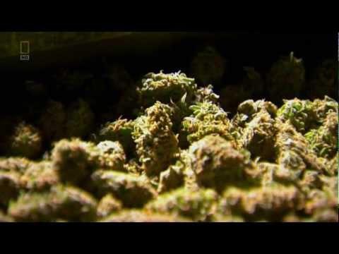 NGC: Super Weed