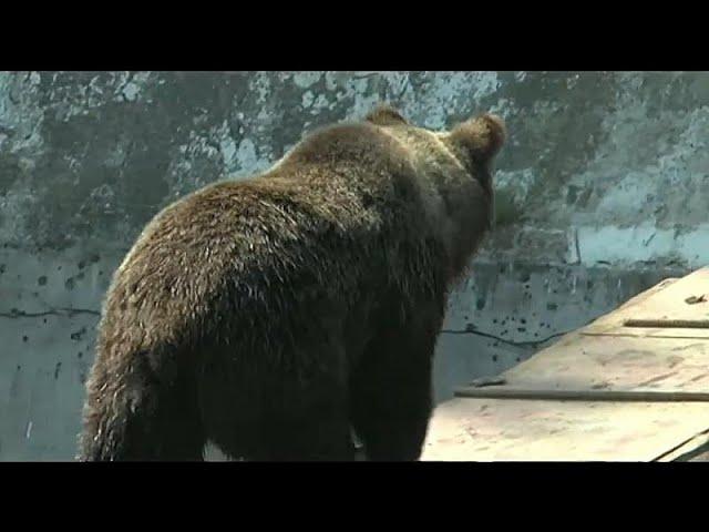 <span class='as_h2'><a href='https://webtv.eklogika.gr/roymania-arkoydes-kykloforoyn-kai-kanoyn-epitheseis-para-ton-cheimona' target='_blank' title='Ρουμανία: Αρκούδες κυκλοφορούν και κάνουν επιθέσεις παρά τον χειμώνα…'>Ρουμανία: Αρκούδες κυκλοφορούν και κάνουν επιθέσεις παρά τον χειμώνα…</a></span>
