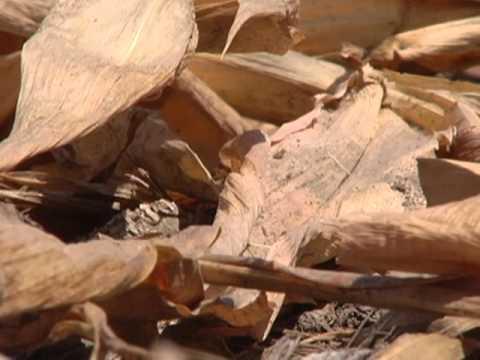 Drought Documentary: A Dry Season