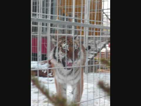 CIRQUE PINDER Visite Du Zoo Photos PART 2