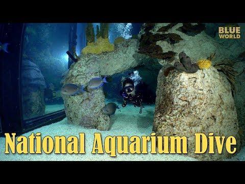 National Aquarium Visit | JONATHAN BIRD'S BLUE WORLD