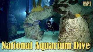 National Aquarium Visit | JONATHAN BIRD