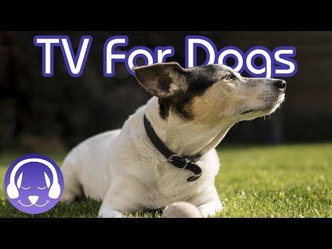 Dog TV: 15 Hours of Entertaining Dog Walks! (2019)