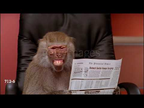 Office Baboon Glasses And Paper Youtube