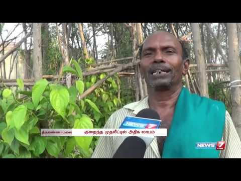 Farmers yield high profit through Betel leaves cultivation | Tamil Nadu | News7 Tamil
