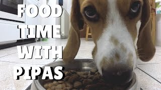 FOOD TIME WITH Pipas ¦ PipasTheBeagle