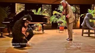 Jane Goodall rencontre David Greybeard,  chimpanzé utilisant et fabriquant un outil