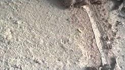 Subterranean Termites in Gilbert AZ