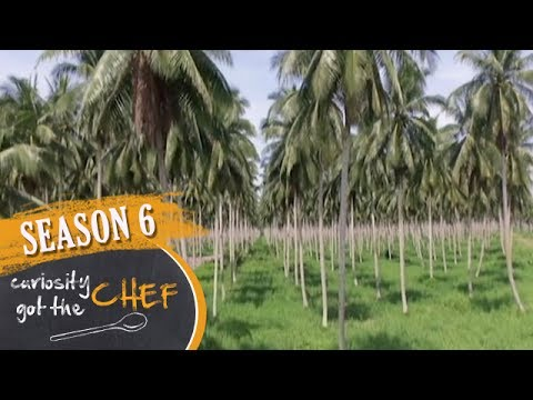 Coconut and Agri Business Park | Curiosity Got The Chef Season 6