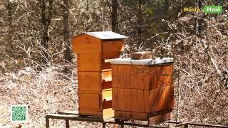 Plzní po stezkách - Naučné stezky v arboretu Sofronka - Naučná stezka o včelách a včelaření