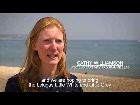 SEA LIFE Trust creates world's first beluga whale sanctuary