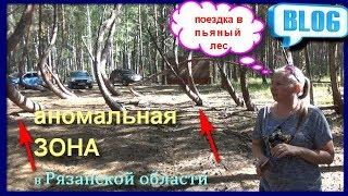 ПЬЯНЫЙ ЛЕС\ АНОМАЛИЯ В РЯЗАНСКОЙ ОБЛАСТИ\ ШИЛОВСКОМ РАЙОНЕ