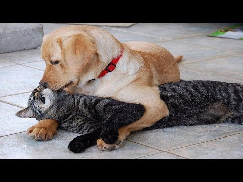 Romantic Dog and cat act like a couple -Funny video compilation