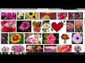 How to Create a Responsive Image Gallery Using JQuery Plugin