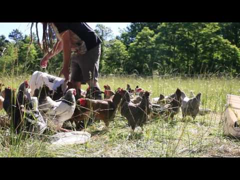 The Movement Project - Episode 7  Interwoven Permaculture Farm