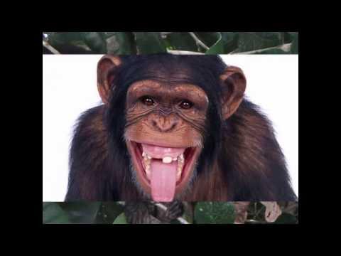 Một số hình ảnh về con khỉ