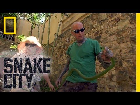 Mamba Shakedown | Snake City