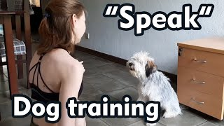 Dog training  command Speak   teach your dog   tibetan terrier Stich