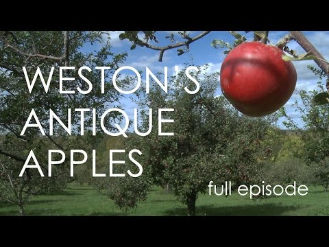Wisconsin Foodie - Weston's Antique Apple Orchard