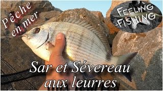 Peche Du Sar Et Du Sévereau Aux Leurres En Mer Gopro HD