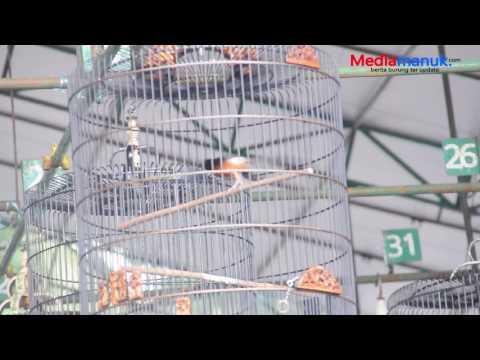 MURAI RAJA DAYAK, Terbaik Dari Yang Terbaik di Piala Walikota Kota BANJAR