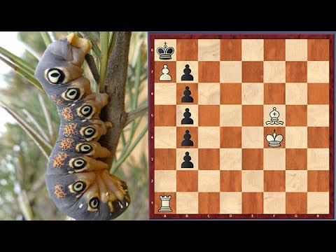 Caterpillar Theme! Joke Chess Problem In Chess