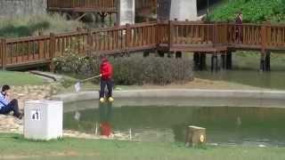 陽明運動公園桃園市桃園區生態池親水區