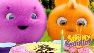 Videos For Kids | BUNNY BIRTHDAY | SUNNY BUNNIES | Funny Videos For Kids