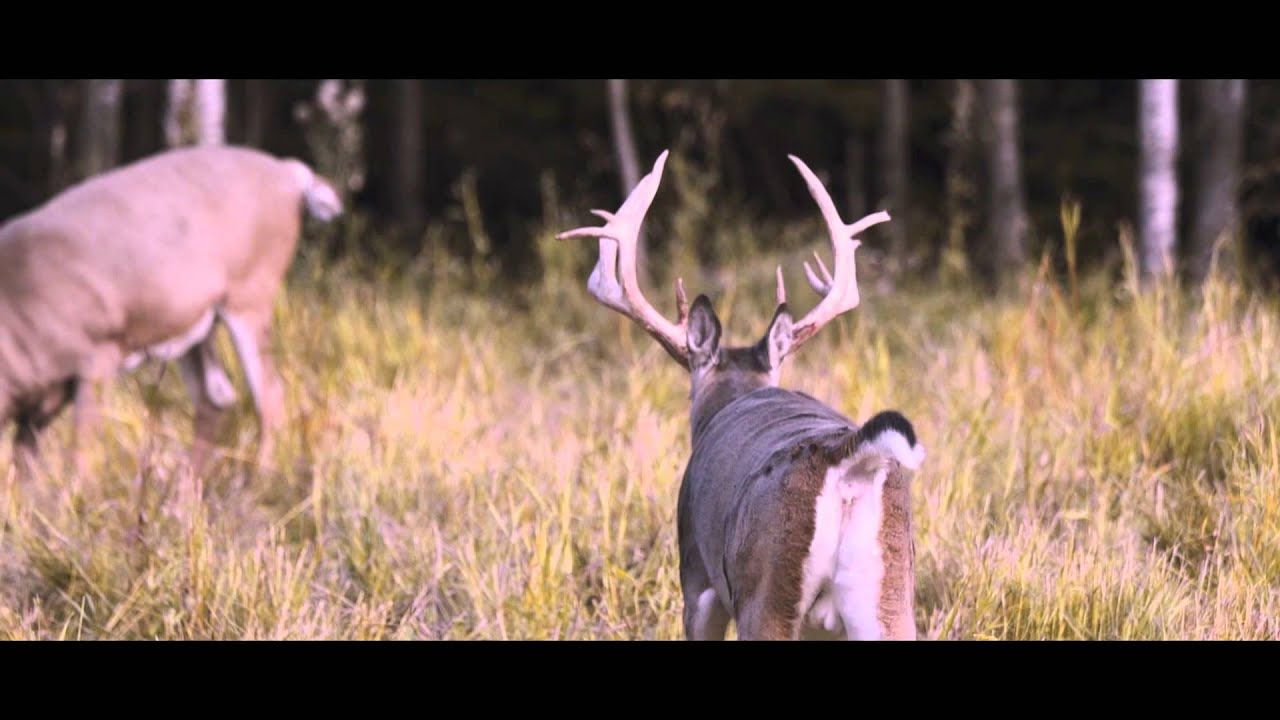Woody River Trophy Hunts - Saskatchewan Whitetail Hunt