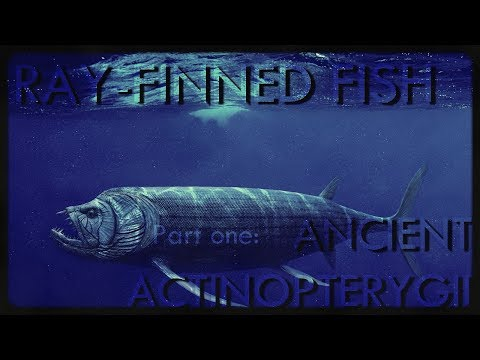 Ray-finned Fish (part1) : Ancient Actinopterygii