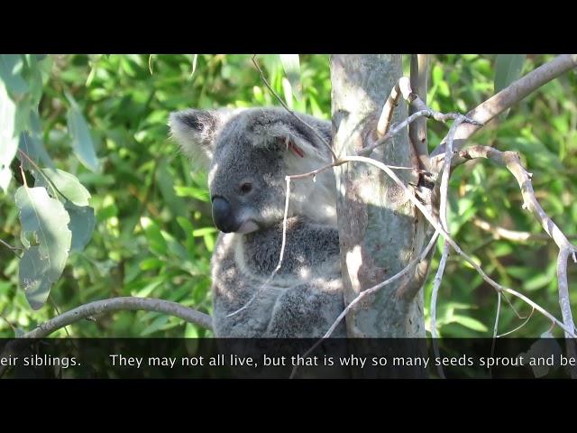 Krissy in natural regeneration trees