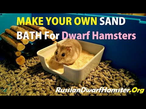 How To Make A Sand Bath For Russian Dwarf Hamsters