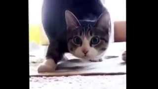 #Тимати & Natan Cлышь ты че такая дерзкая ? Танцует кот