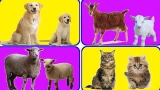 जानवर और जानवरों के बच्चों के नाम || Animal Baby Name in Hindi