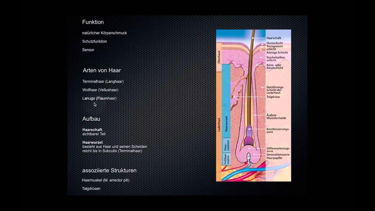 Wie ist die Haut aufgebaut? (Advanced) - YouTube