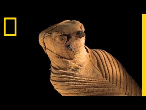 Animal Mummies: Pets Of The Pharaohs | National Geographic