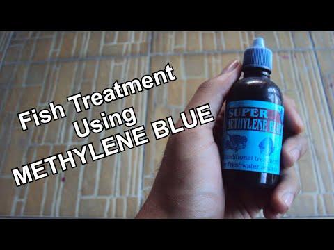 Fish Treatment - (Using Methylene Blue)