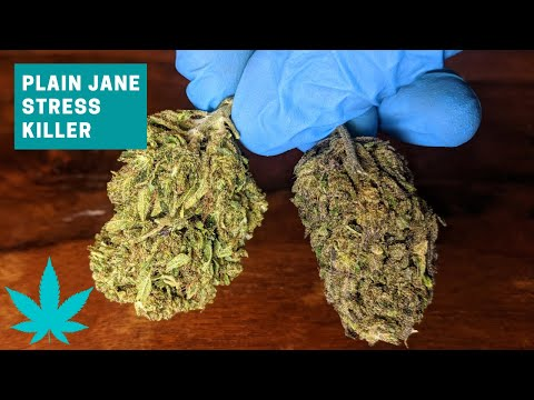Stress Killer CBD Hemp Bud Review (Plain Jane)