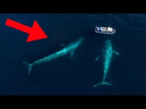 Gigantische Tiere, die