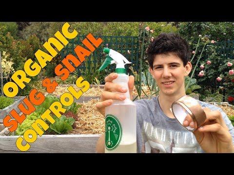 Organic Slug & Snail Controls For Vegetable Gardens