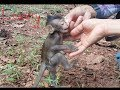 Amazing Good Relationship Cute Baby & Human, A Small Baby Monkey Like Playing With Human