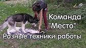 Объявления о продаже собак в брянске. Описание, фото, цены на сайте моя реклама.
