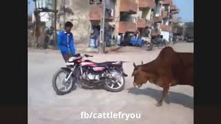 Funny animal attack on people Latest funny videos