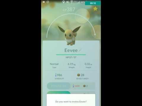 Evolving an Eevee (400 cp!) (Pokémon Go)